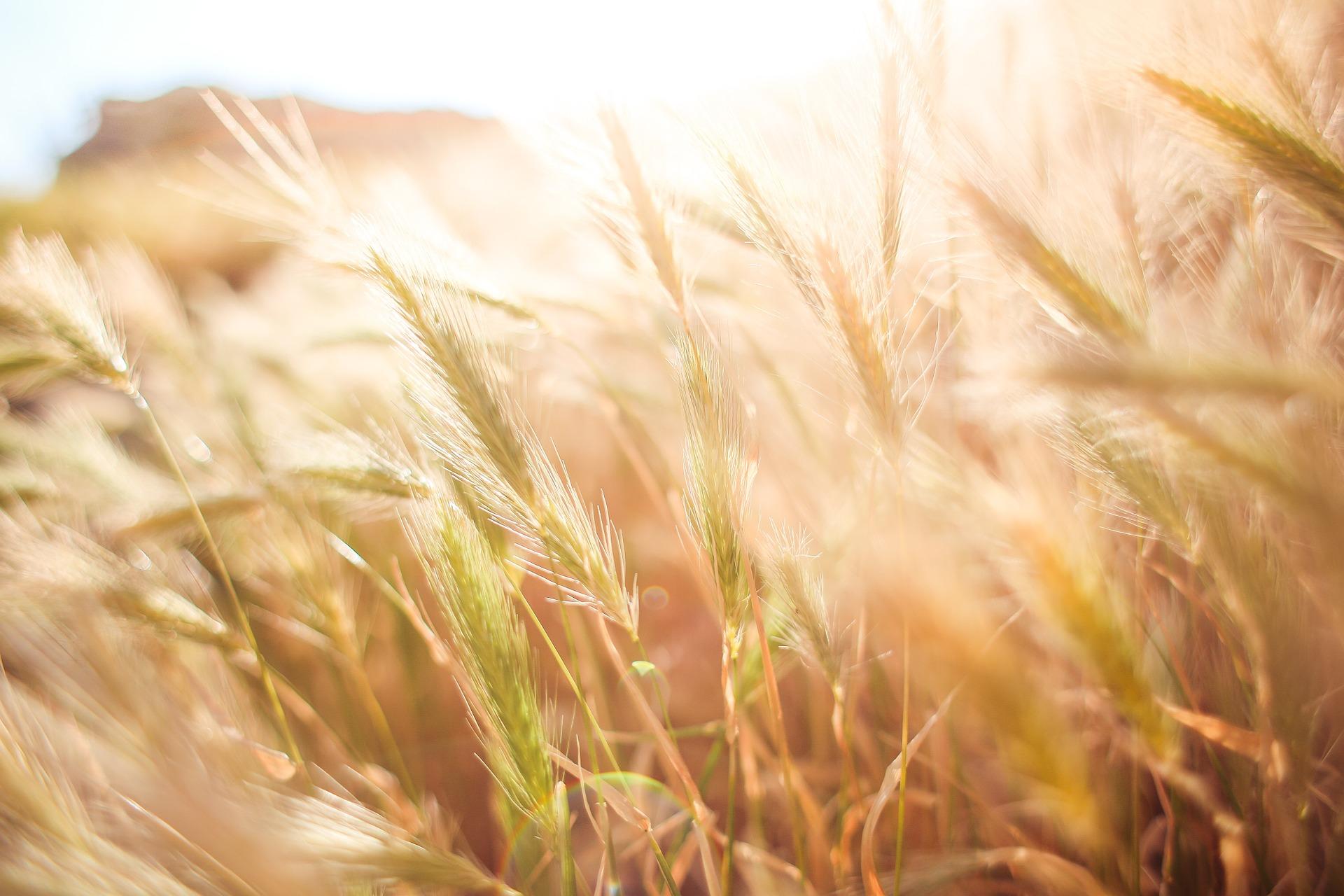 L'agriculture française en perte de vitesse
