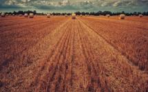 Les marges des agriculteurs stagnent voire baissent dans certaines filières