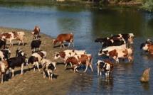 L'agroalimentaire, un secteur « oublié » de la lutte contre les gaz à effet de serre