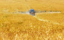 Monsanto condamné à cause du glyphosate, Bayer chute en Bourse